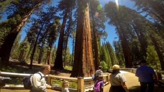 Yosemite's Mariposa Grove reopens on Friday