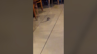 Rat scurries across floor of Fresno restaurant