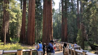 Yosemite's Mariposa Grove welcomes visitors Monday after fire closure