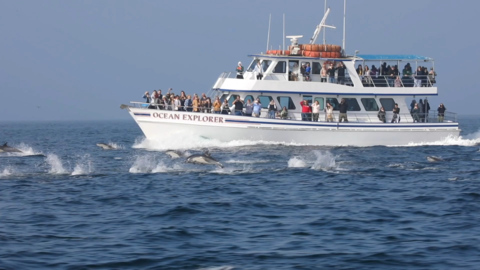 Dolphin stampede captured near California sightseeing tour boat