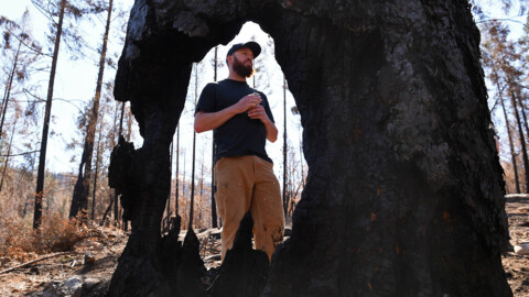 Creek Fire ignited in spot where Sierra tree-thinning effort was to begin. Coincidence?