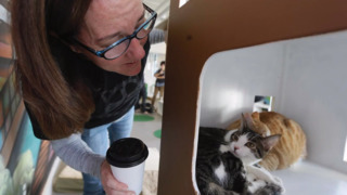 What is a cat cafe?
