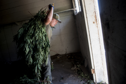 Deputies take down 21 illegal weed greenhouses and rooms on Merced County property