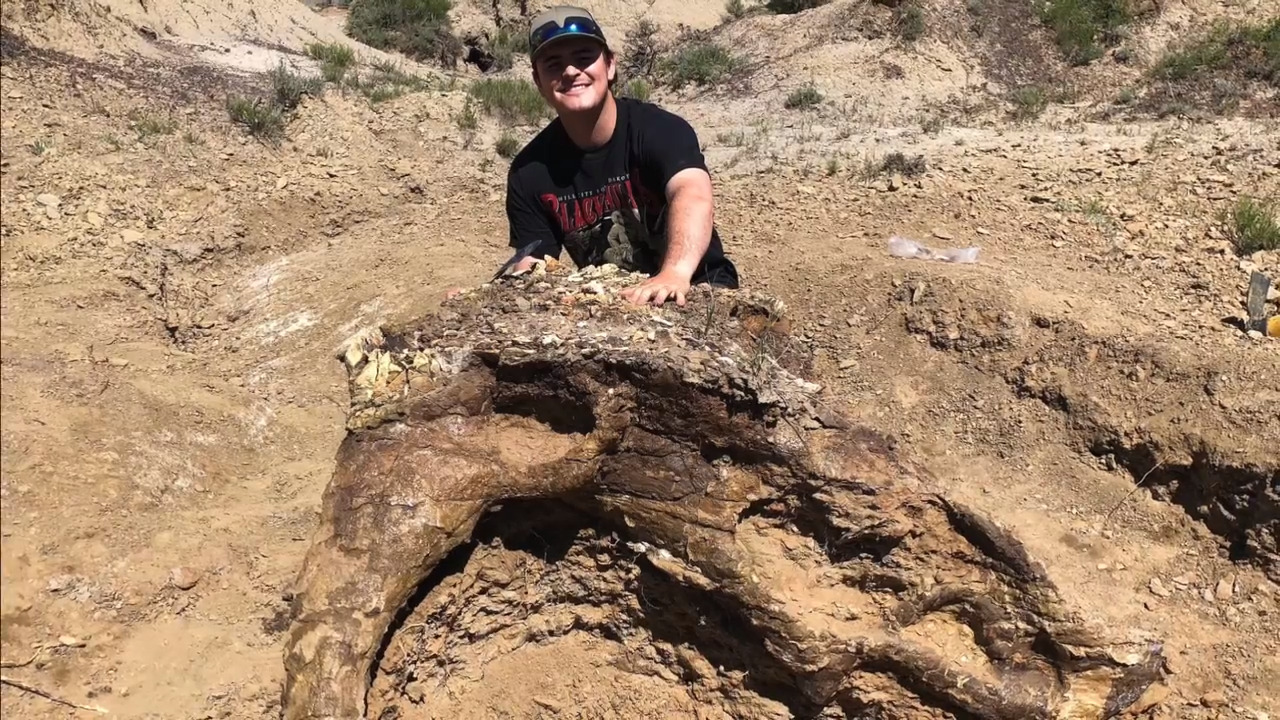 UC Merced student discovers giant dinosaur skull. It's 65 million years old