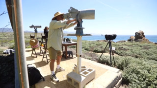 'A wonderful gig': Piedras Blancas whale researcher retires after 27 years with NOAA