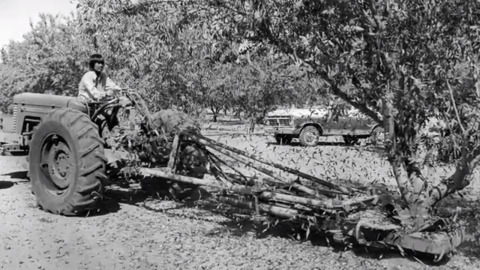 Paso Robles used to be the Almond Capital of the World. What happened?