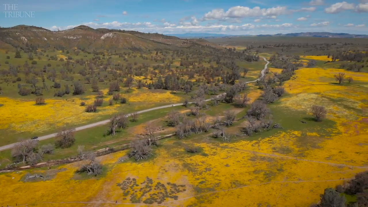 Still haven't seen the super bloom? There's still time — here's where to view wildflowers