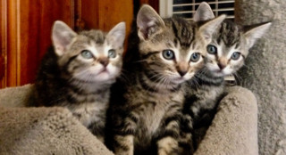 3 adorable kittens were found in a field in SLO County. Now they're looking for a new home