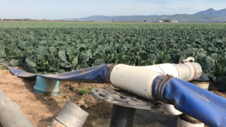 Row after row of crops in the Salinas Valley depend on Nacimiento water