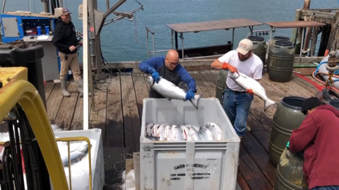 Heads up, salmon lovers: Epic catch brings tons of fresh fish to the Central Coast