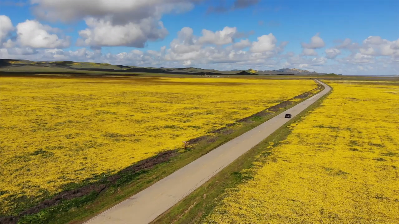 California Wildflower Super Bloom - Cover