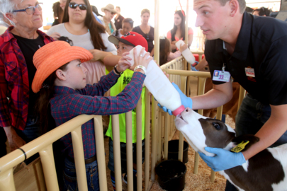 New animal attractions at California Mid-State Fair: Rattlesnakes, alligators and racing pigs