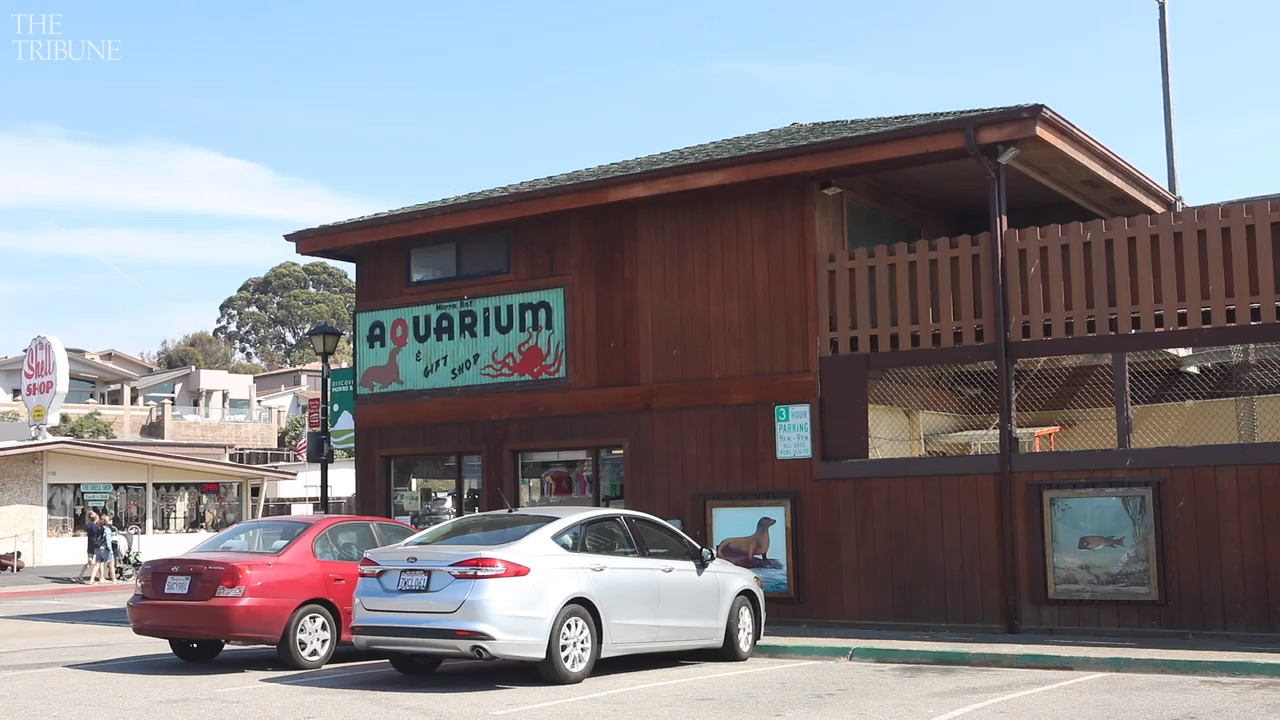 Morro Bay aquarium isn't dead just yet. Here's how much is needed to re-open