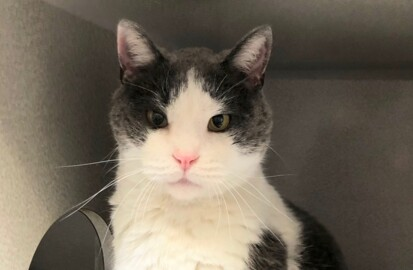 Meet Donner, a friendly, affectionate cat looking for his forever home
