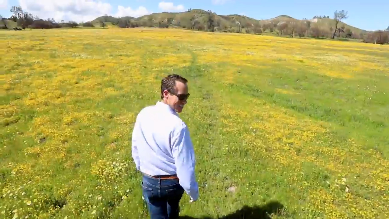 'Pictures don't really do it justice': Wildflowers on Shell Creek Road draw thousands