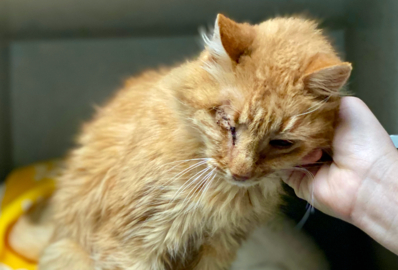 Pet Tales: Captain Jack the one-eyed pirate cat is looking for a new home