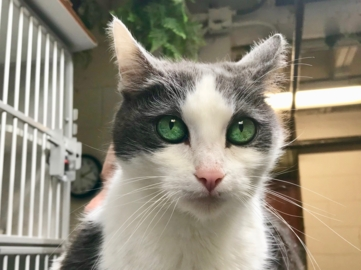 Pet Tales: Meet Sasha the cat, a social indoor kitty looking for her forever home