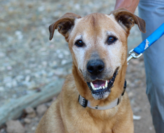 Pet Tales: Bruno the sweet senior dog needs a new home