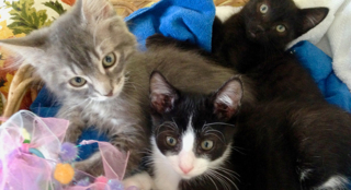 These playful kittens (and many other pets) are waiting for SLO County homes