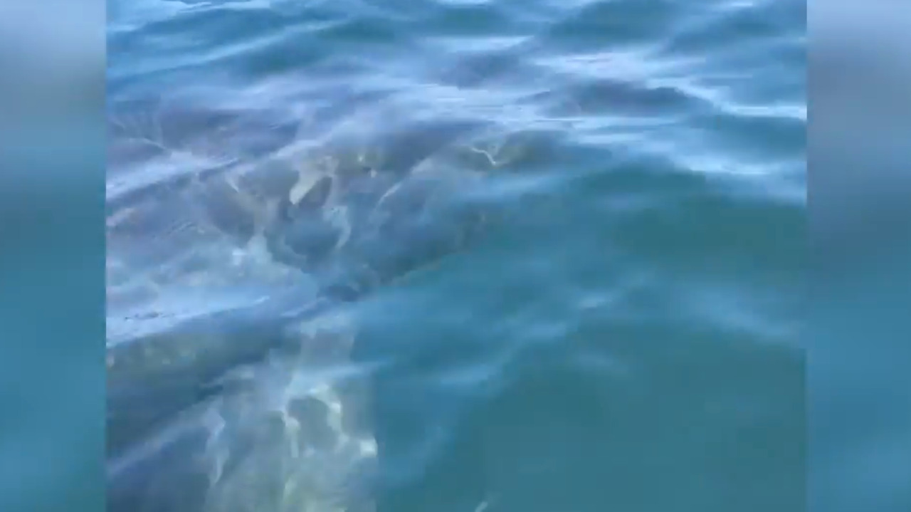 'Is it a great white?' Huge shark cruises by kayaking brothers near Cambria