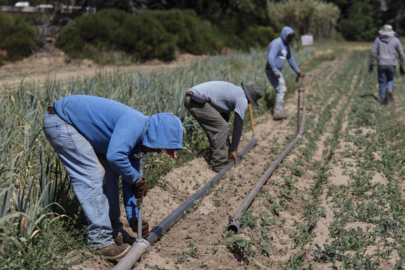 'People are really hurting right now.' How COVID-19 is hitting SLO County farm workers