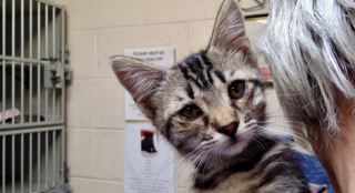 Meet Jillian, a playful kitten who is looking for her forever home