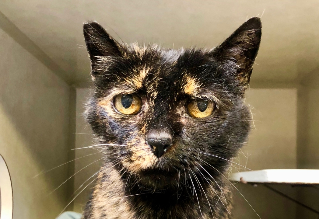 Tori the tortoiseshell cat has 'feline wisdom' to share — and she needs a new home
