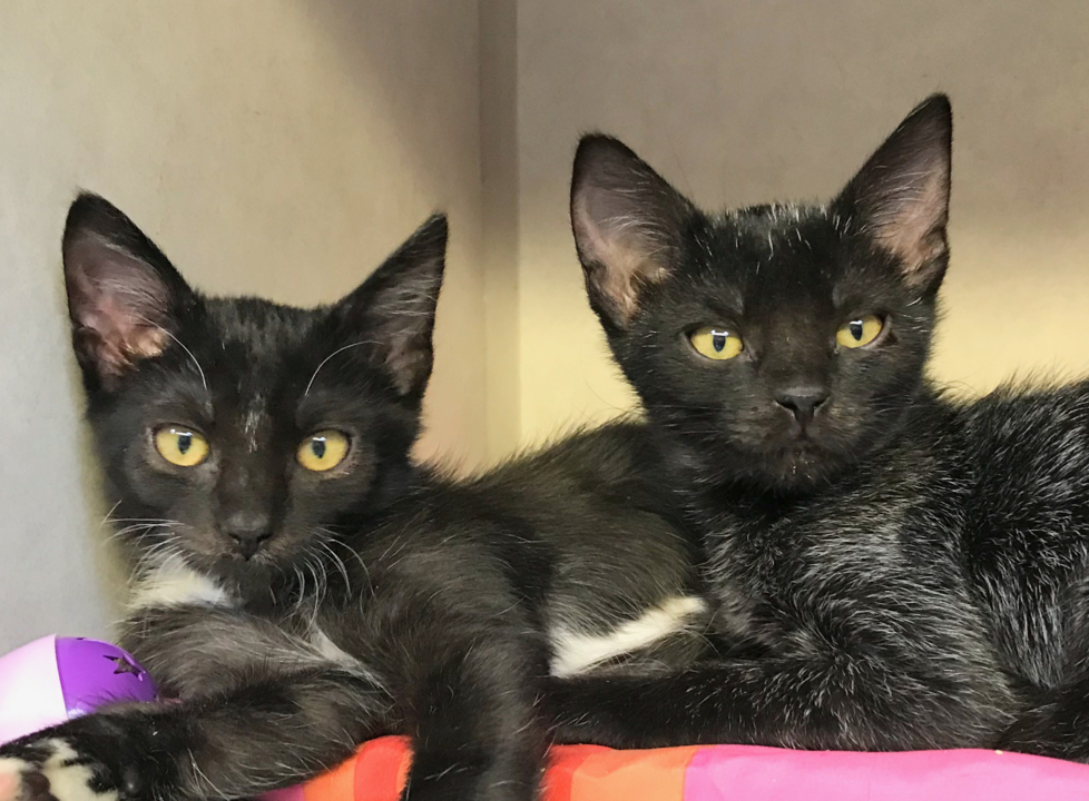 SLO animal shelter is full of kittens in need of new homes —including Camilia and Angela
