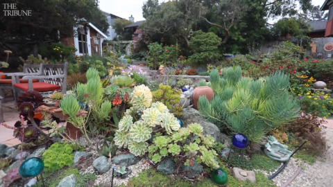 Susie Hubbard's garden in Los Osos an oasis in a compact space