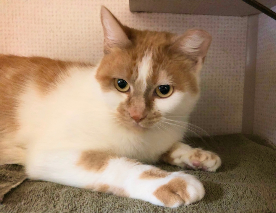Sunny the sweet cat is looking for love that lasts a lifetime