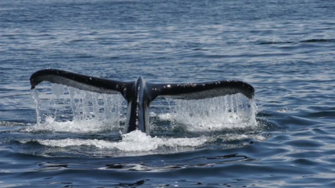 See whales from San Luis Obispo County tour boats and shores
