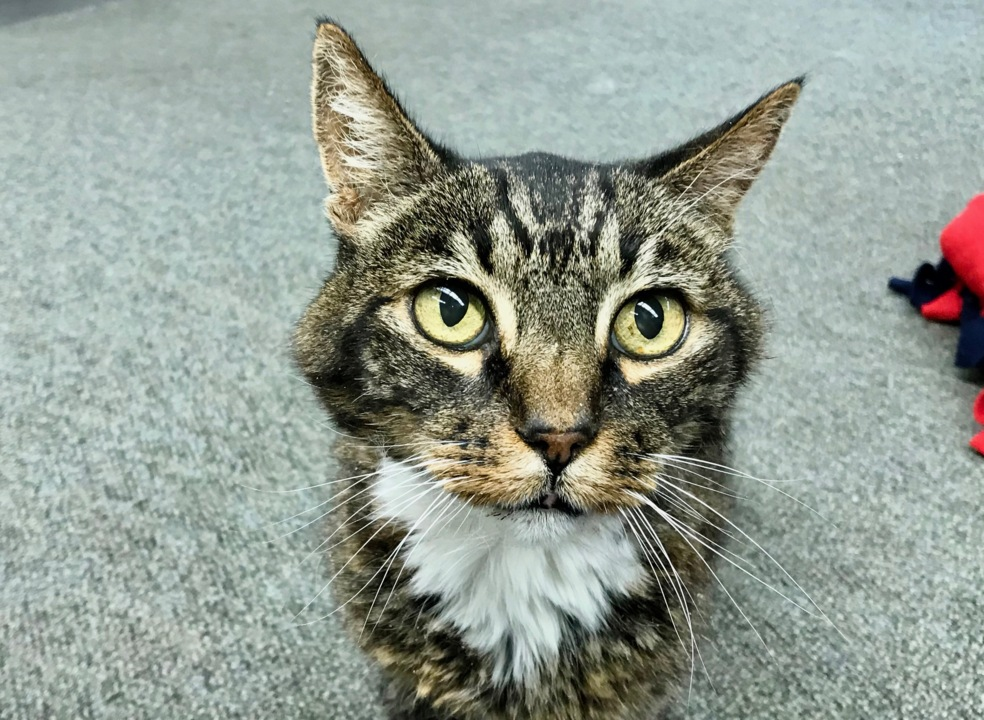Love pets? These cute, cuddly tabby cats need new homes