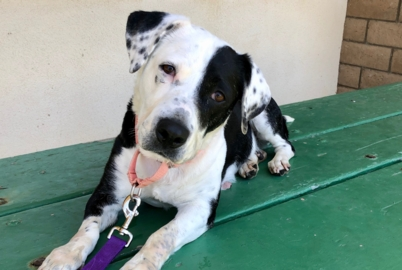 Pet Tales: Betty the basset hound mix is looking for her forever home