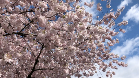 Spring is here and so are the blooms on these flowering trees