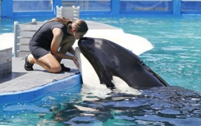 Should Lolita be freed? What's next for her and other large marine mammals in captivity.