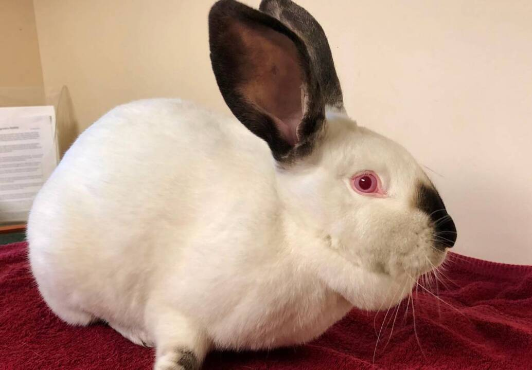 12 Strays of Christmas: Tofu hoping for 'somebunny' to love her, and her sister