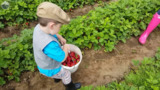 We tracked down the best U-pick berry farms in Whatcom County so you don't have to