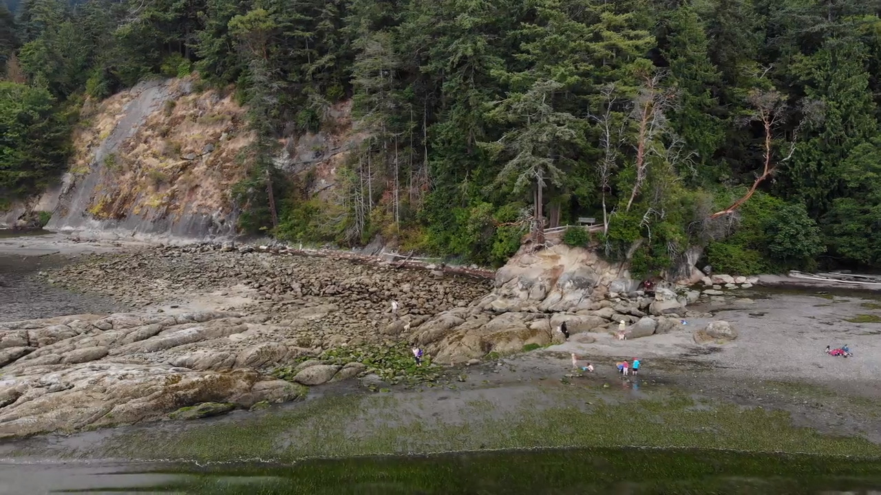 This Whatcom beach reveals a hidden world when the tide is out