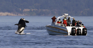 Whale watch group adopts new rules for ecotourism