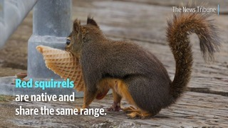 How well do you know your squirrels?