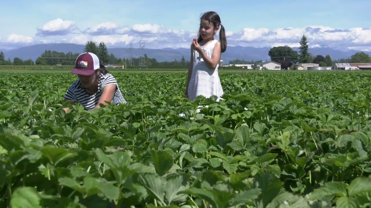 With harvest season upon us, here's how Whatcom farming is changing