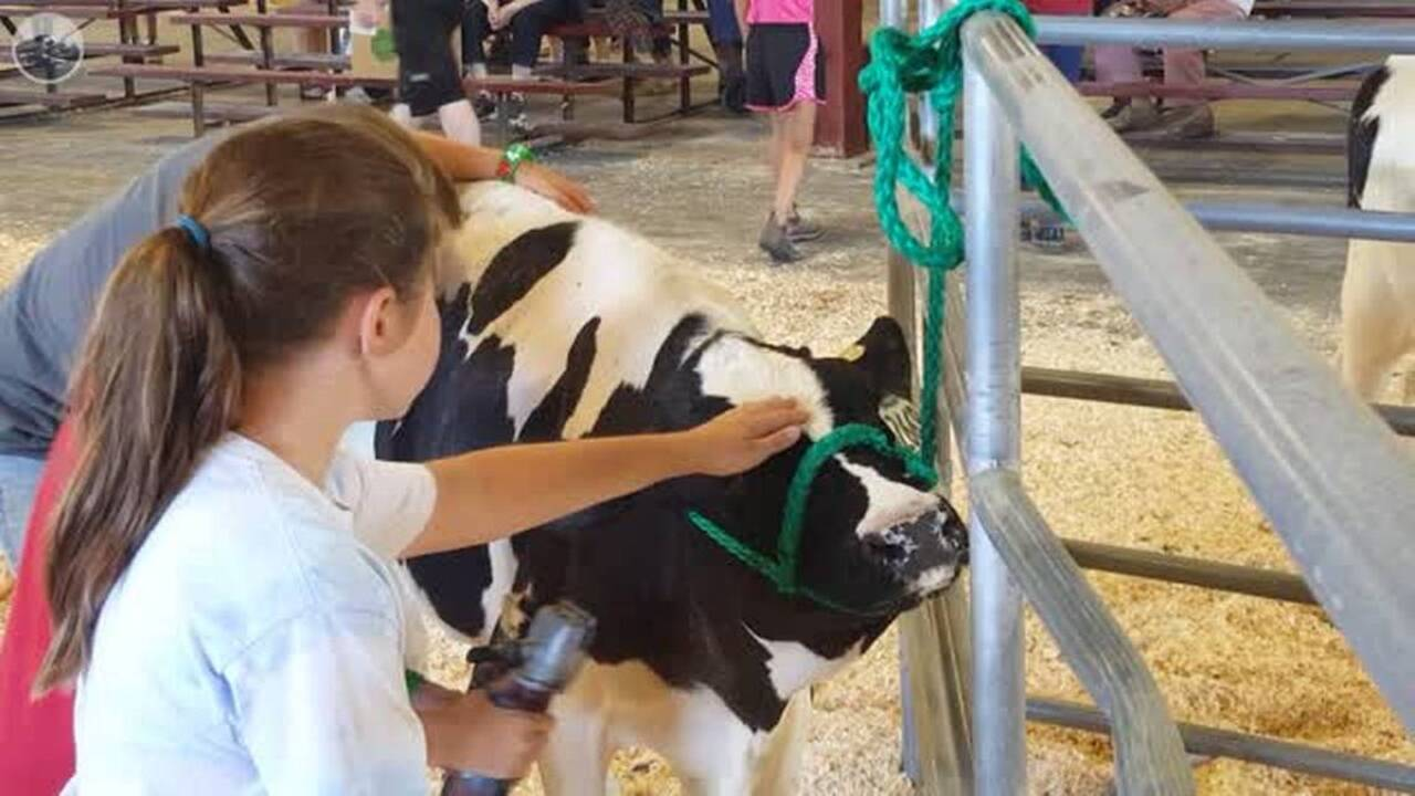 You can win a ribbon at the virtual Northwest Washington Fair. Here's how