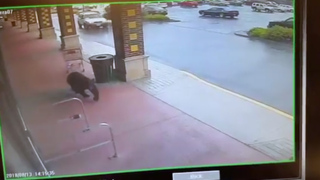 Bear tries to walk into Connecticut liquor store