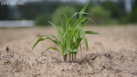 In wet summer weather, watch out for plant disease