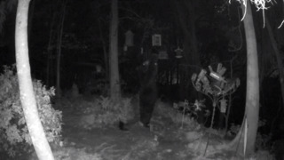 Bear caught on video trying to play with bird feeders in South Carolina backyard