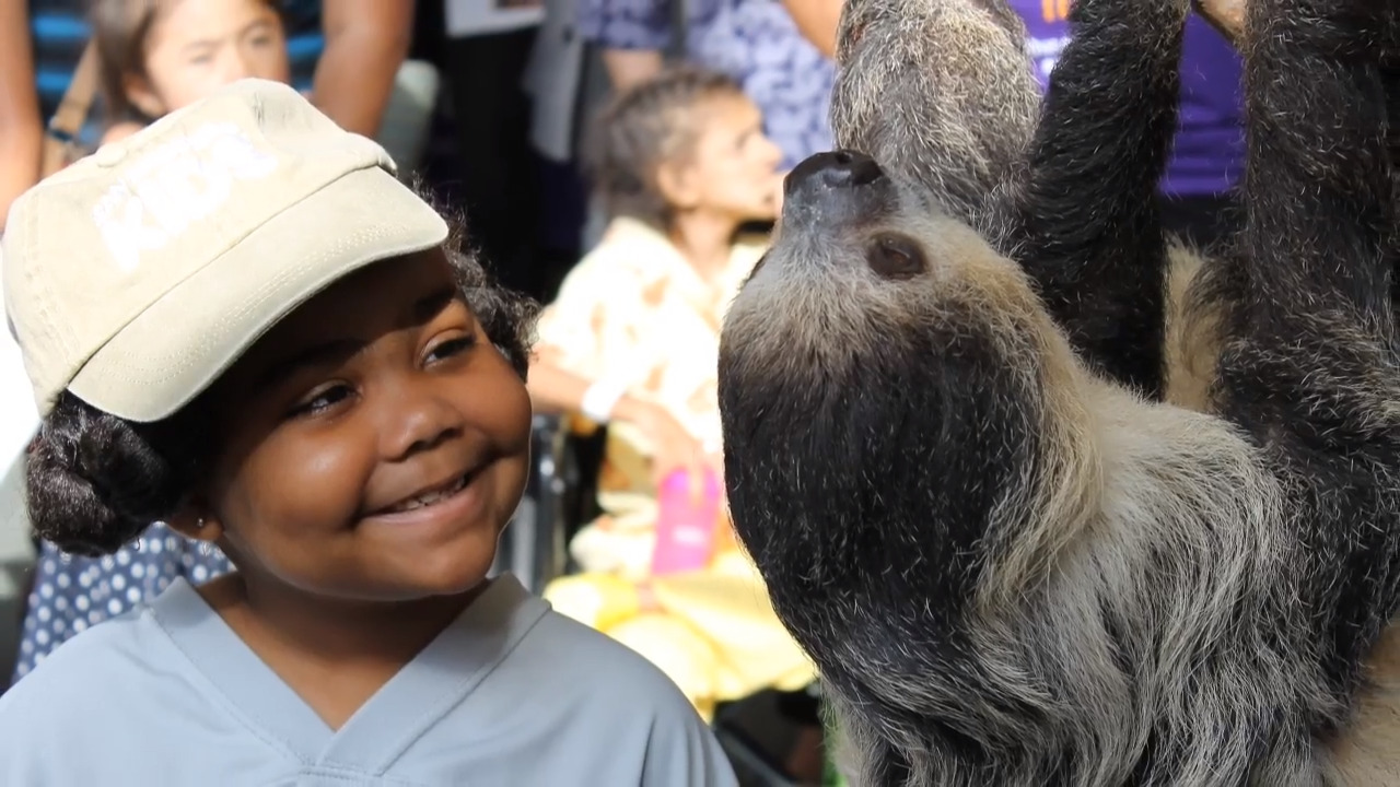 Sloth visits Tacoma's Mary Bridge to help launch TV channel
