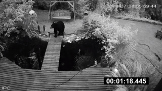 Curious black bear moseys around Gig Harbor backyard