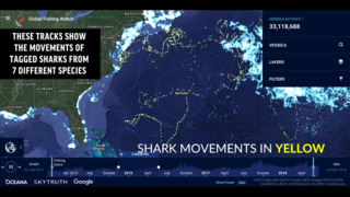 New shark tracker shows locations of sharks and commercial fishing