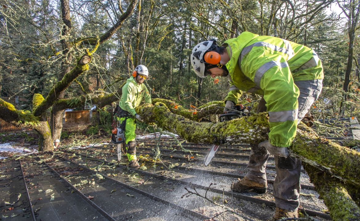 Weeping over your snow-clobbered willow? Here's how to lessen storm damage to trees