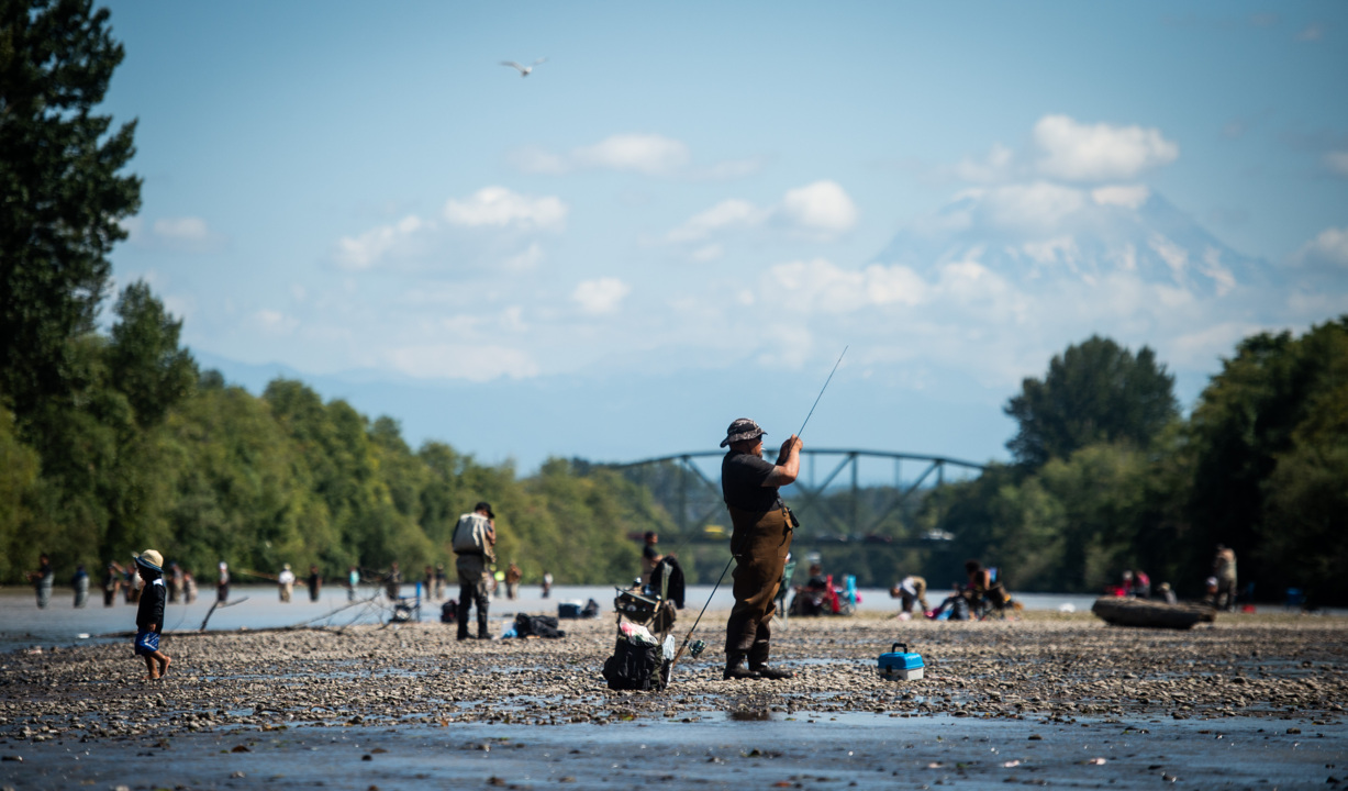 Salmon at 'scary' low levels in area rivers as fishing season opens on the Puyallup